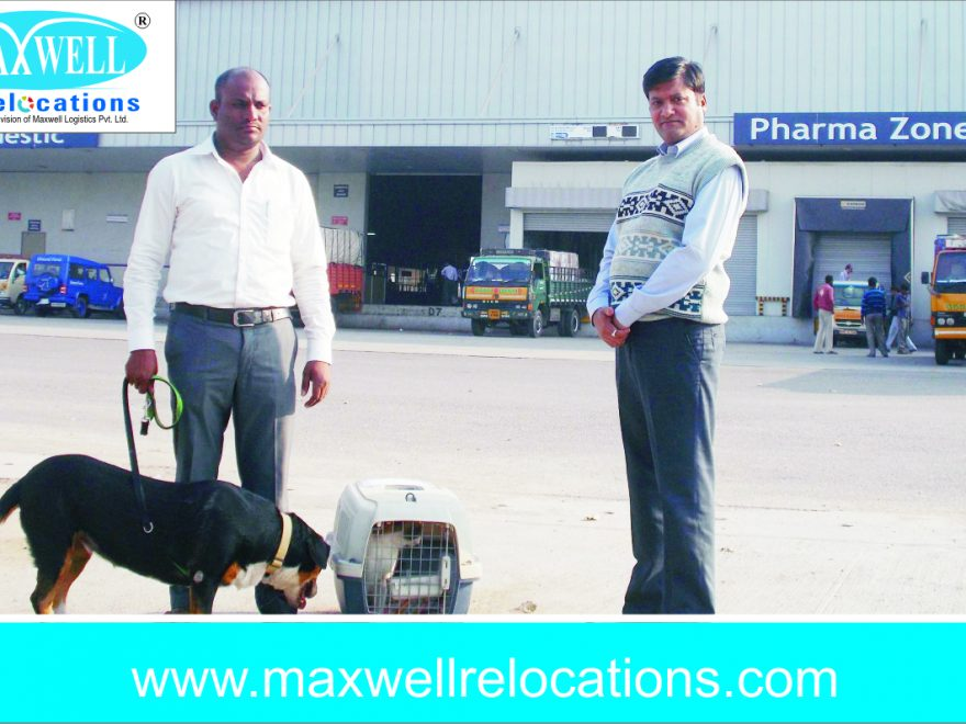 Hire best relocation services provider for optimum results